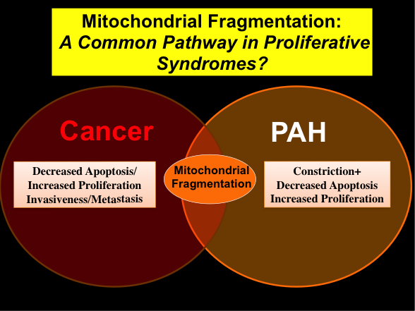 mitochondrial-fragmentation-a-common-pathway-in-proliferative-syndromes