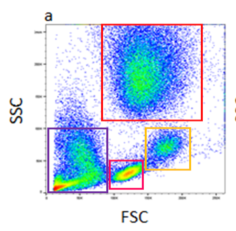 Flow Cytometry and Cell Culture
