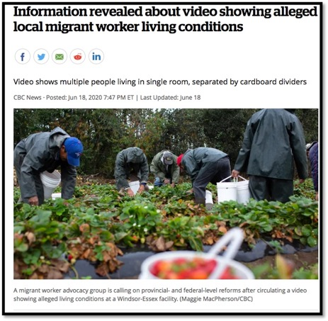 Screenshot of News article titled: Information revealed about video showing alleged local migrant worker living conditions